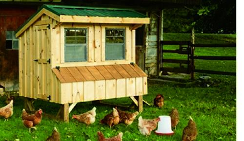 4x6 board and batten quaker chicken coop metal roof